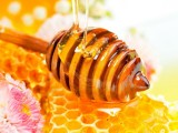 Thank goodness for Bees: National Honey Week2012